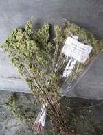 dried-Oregano-tn